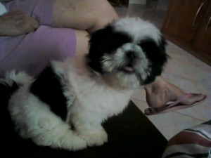 cachorro Flor (2)