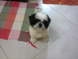 cachorro Flor