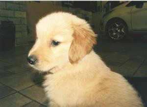 cachorro Maria