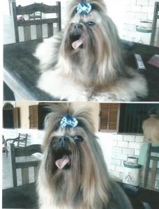 cachorro Sofia (2014)
