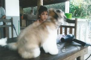 cachorro Sofia e Lila