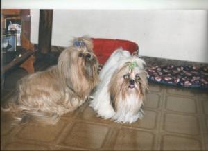 cachorro Victória e Thifany