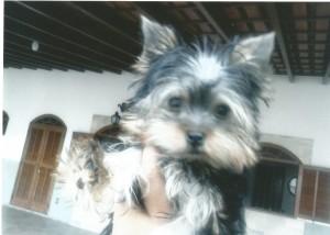 cachorro pessoais Babi - 2014