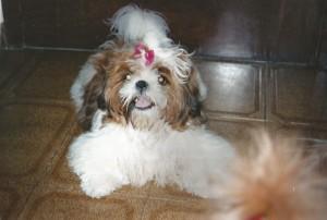 cachorro pessoais Filha da Victória