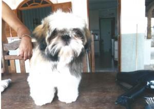 cachorro pessoais Lila - Novembro de 2014 2