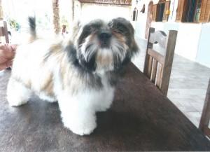 cachorro pessoais Lila - Novembro de 2014